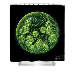Shower Curtain featuring the digital art Volvox by Russell Kightley