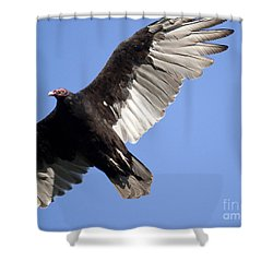 Shower Curtain featuring the photograph Vulture by Jeannette Hunt