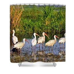 Wading Ibises Shower Curtain by Al Powell Photography USA
