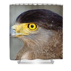 Shower Curtain featuring the photograph Waiting For Prey  by Fotosas Photography
