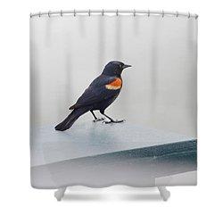 Waiting Shower Curtain