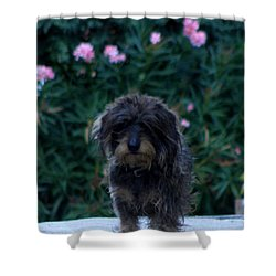Waiting Shower Curtain by Lainie Wrightson