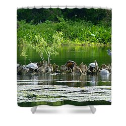 Wakulla Springs Wildlife Shower Curtain