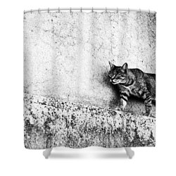 Shower Curtain featuring the photograph Walking On The Wall by Laura Melis