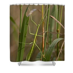 Walking Stick Insect Shower Curtain by Ted Kinsman