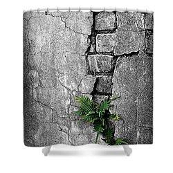Wall Ferns Shower Curtain by Perry Webster