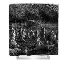Walrus Beach Shower Curtain by Debra and Dave Vanderlaan