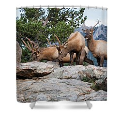 Wapiti Shower Curtain