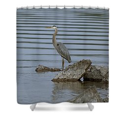 Watchful Shower Curtain by Eunice Gibb