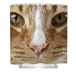 Shower Curtain featuring the photograph Watching And Waiting by Jeannette Hunt