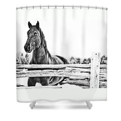 Shower Curtain featuring the photograph Watching Close by Traci Cottingham
