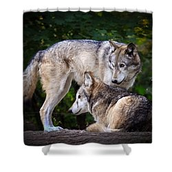 Shower Curtain featuring the photograph Watching Over by Steve McKinzie