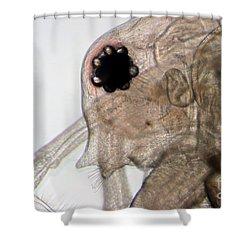 Water Flea Daphnia Magna Eye Shower Curtain by Ted Kinsman