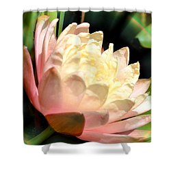 Water Lilly In Bloom Shower Curtain by Maria Urso