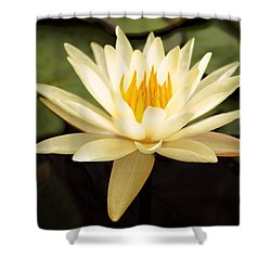 Water Lily Shower Curtain