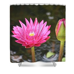 Shower Curtain featuring the photograph Water Lily by Donna  Smith