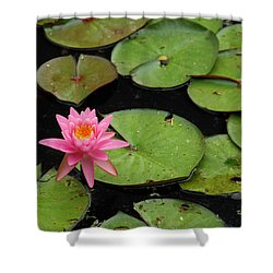 Water Lily Shower Curtain by Kay Lovingood