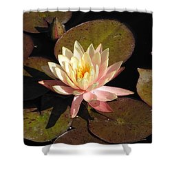 Water Lily Shower Curtain by Michelle H