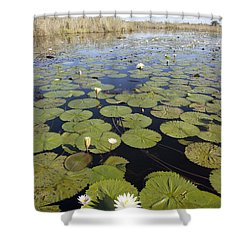 Water Lily Nymphaea Sp Flowering Shower Curtain by Matthias Breiter