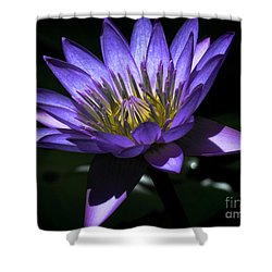 Water Lily  Reveal Shower Curtain by Karen Lewis