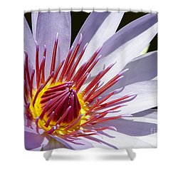 Water Lily Soaking Up The Sun Light Shower Curtain by Sabrina L Ryan