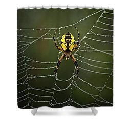 Weave Master Shower Curtain by Susan Capuano