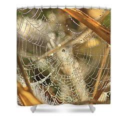 Shower Curtain featuring the photograph Web Of Jewels by Penny Meyers