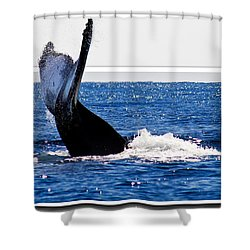 Whale Tail Shower Curtain by Jean Noren