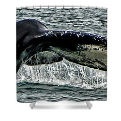 Whale Tail Shower Curtain by Jon Berghoff