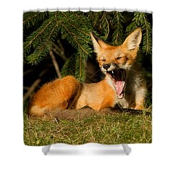 What A Day Shower Curtain by Mircea Costina Photography