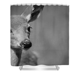 What A Face Shower Curtain by Karol Livote