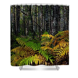 Where The Ferns Grow Shower Curtain