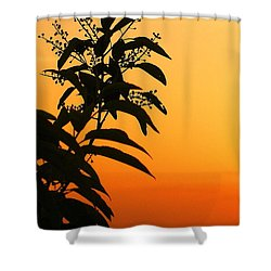 Whipple Hill Shower Curtain