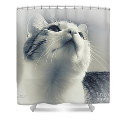 Whiskers Shower Curtain by Jutta Maria Pusl