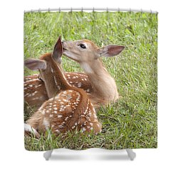 Shower Curtain featuring the photograph Whispering Fawns by Jeannette Hunt