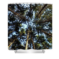 Shower Curtain featuring the photograph Whispering Pines by Rachel Cohen