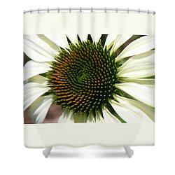 White Coneflower Daisy Shower Curtain by Donna Corless