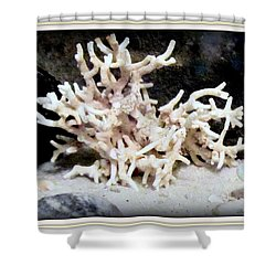 Shower Curtain featuring the photograph White Coral  by Danielle  Parent