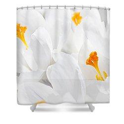 White Crocus Blossoms Shower Curtain by Elena Elisseeva