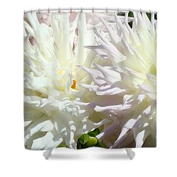 White Dahlia Flowers Art Prints Floral Shower Curtain by Baslee Troutman