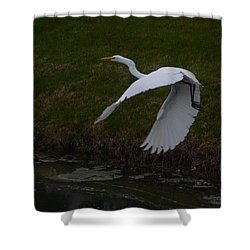 White Egret Shower Curtain by Randy J Heath