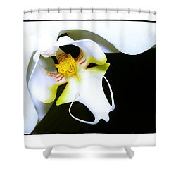 Shower Curtain featuring the photograph White Elegance by Judi Bagwell