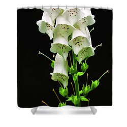 Shower Curtain featuring the photograph White Foxglove by Albert Seger