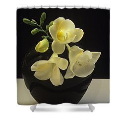 White Freesias In Black Vase Shower Curtain by Susan Rovira
