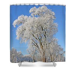 White Frost Tree Shower Curtain by Ralf Kaiser