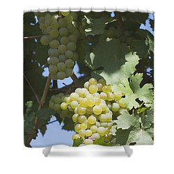 White Grapes On The Vine Shower Curtain by Michael Interisano