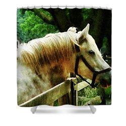 White Horse Closeup Shower Curtain by Susan Savad