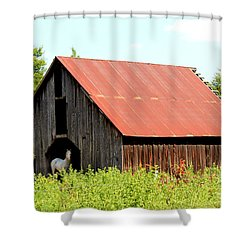 Shower Curtain featuring the photograph White Horse Waiting by Kathy  White