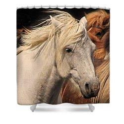 White Icelandic Horse Shower Curtain