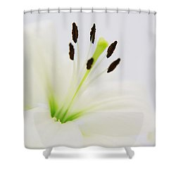 White Lily  Shower Curtain by Angela Doelling AD DESIGN Photo and PhotoArt